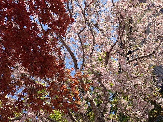 2014-04-14 09.51.51.jpg