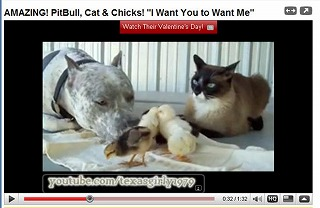 cat_dog_chikin2.jpg