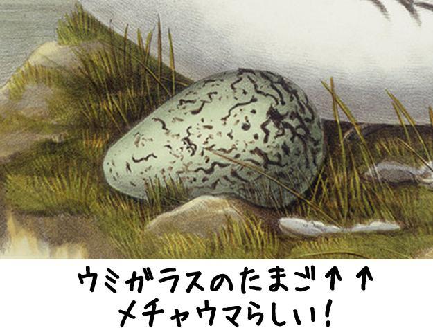 egg_eggwar201706.jpg