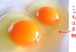 fake_eggs3honmono.jpg