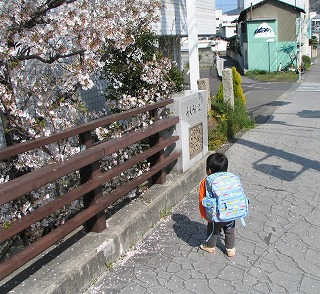 hanami_musuko_back.jpg