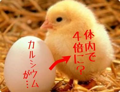 hiyoko_tamago_igu.jpg