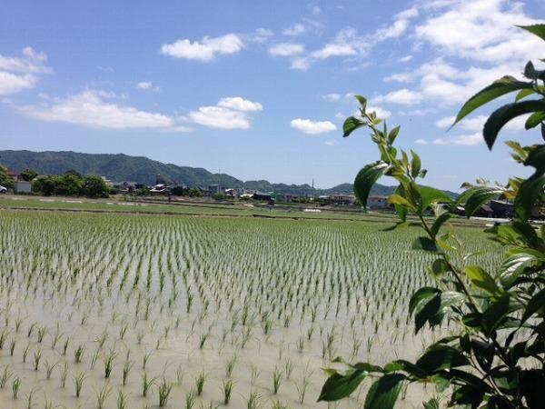 kaishamae201405.jpg