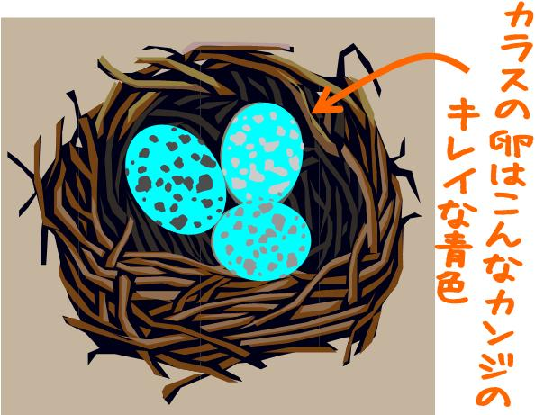 karasu_egg201406.jpg