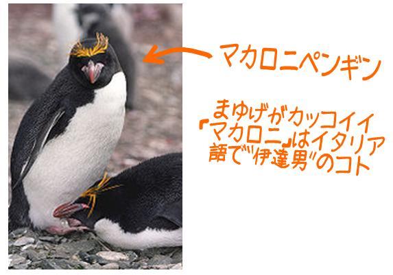 macaroni_penguin2.jpg
