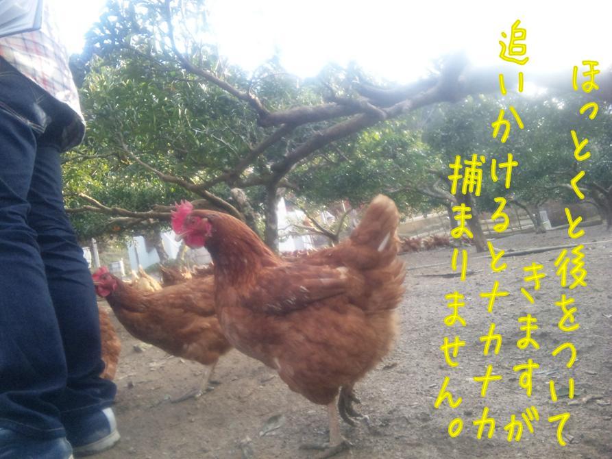 niwatori_doro_news201512.jpg