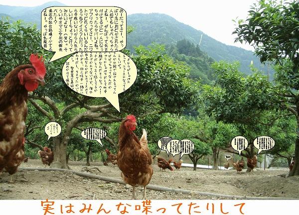 niwatori_shaberu201405.jpg
