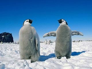 penguinegg2.jpg