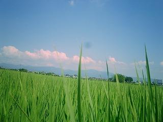tanbo_nakagawa.jpg