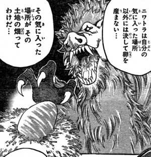 toriko_niwatora.jpg